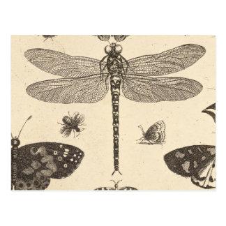 Arte del vintage de la libélula detalle postal
