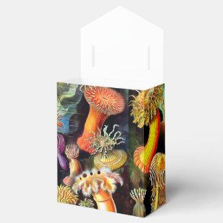 Arte del vintage de las anémonas de mar de Ernst Caja Para Regalos