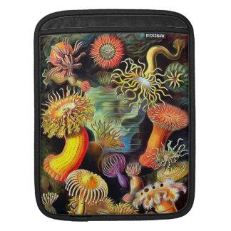 Arte del vintage de las anémonas de mar de Ernst Funda Para iPads