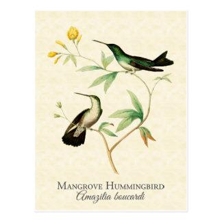 Arte del vintage del colibrí del mangle tarjetas postales