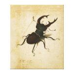 Arte del vintage del renacimiento del escarabajo lienzo envuelto para galerías