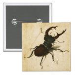 Arte del vintage del renacimiento del escarabajo pin cuadrada 5 cm