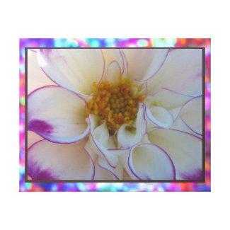 Arte en lienzo Lámina - La Dalia Blanca y Púrpura Canvas Prints