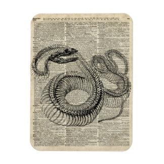 Arte esquelético de la página del diccionario del iman de vinilo