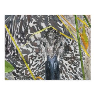 Arte femenino de la fauna de la pintura del pato d tarjetas postales