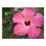 Arte floral de la impresión de la foto de la natur