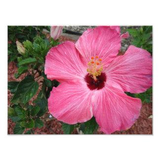 Arte floral de la impresión de la foto de la natur cojinete