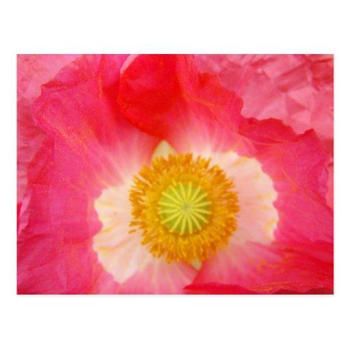 Arte floral de las amapolas rosadas de las postale tarjetas postales
