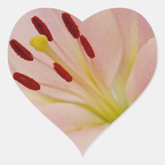 Arte floral del lirio rosado calcomanía de corazón