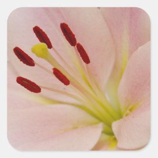 Arte floral del lirio rosado calcomanías cuadradas