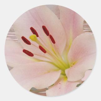 Arte floral del lirio rosado etiqueta redonda