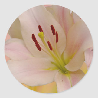 Arte floral del lirio rosado etiquetas redondas