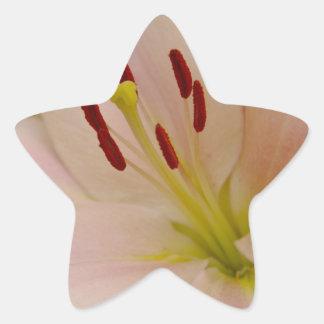 Arte floral del lirio rosado pegatinas forma de estrellaes
