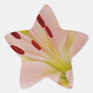 Arte floral del lirio rosado calcomanías forma de estrellas