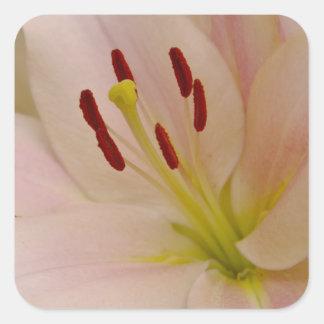 Arte floral del lirio rosado calcomania cuadradas personalizada