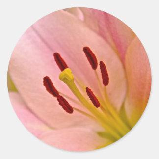 Arte floral del lirio rosado pegatina redonda