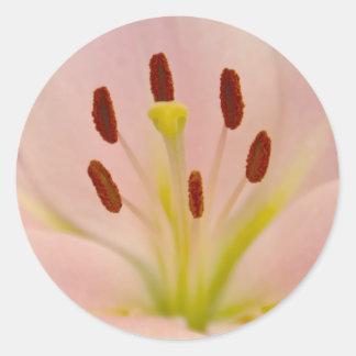 Arte floral del lirio rosado pegatinas redondas