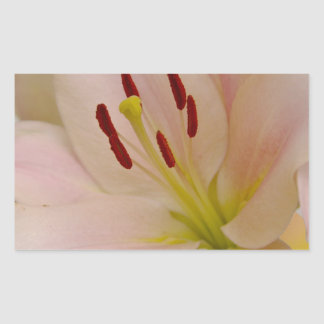 Arte floral del lirio rosado rectangular pegatina