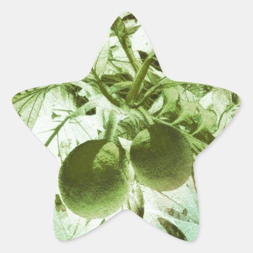 Arte gráfico de la selva de los árboles del pan pegatina en forma de estrella