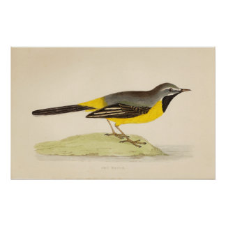 Arte gris antiguo del Wagtail Póster