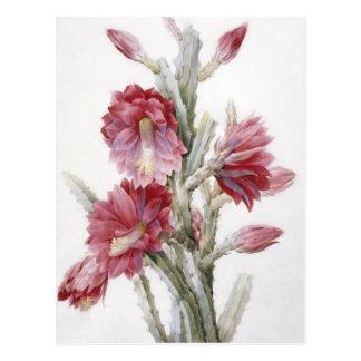 Arte hermoso de la acuarela de la floración del postales