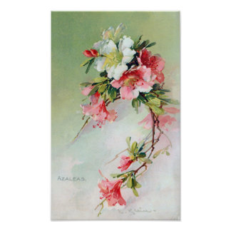 Arte hermoso del vintage de las azaleas posters