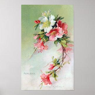 Arte hermoso del vintage de las azaleas póster