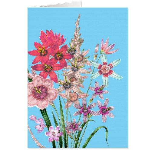 Arte impreso vintage floral del dibujo del ejemplo felicitacion