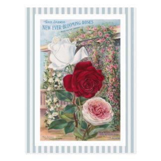 Arte Nunca-Floreciente del vintage de los rosas Tarjeta Postal