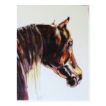 Arte original del caballo tarjetas postales