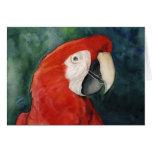 """""""Arte original Notecard del Macaw del escarlata"""""""