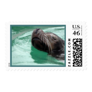 Arte perezoso del león marino