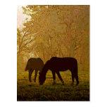 Arte pop de los caballos postal
