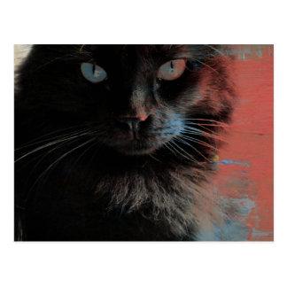 Arte popular, fondo azul blanco rojo del gato negr postal
