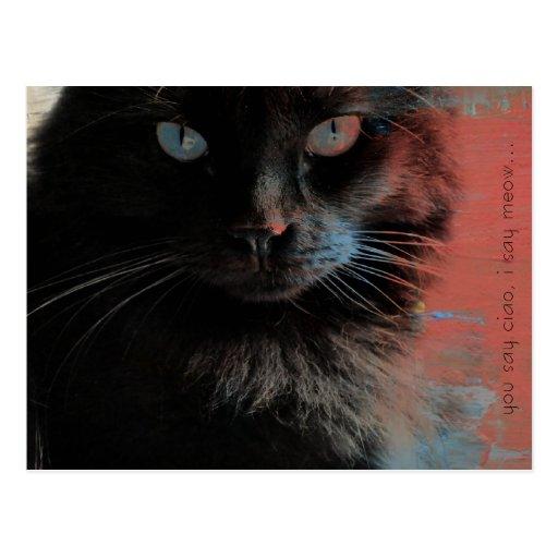Arte popular, gato negro, postales del maullido de