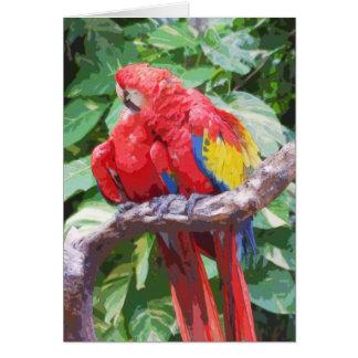 Arte Preening del Macaw del escarlata Tarjeta De Felicitación