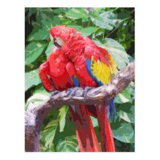 Arte Preening del Macaw del escarlata Tarjetas Postales