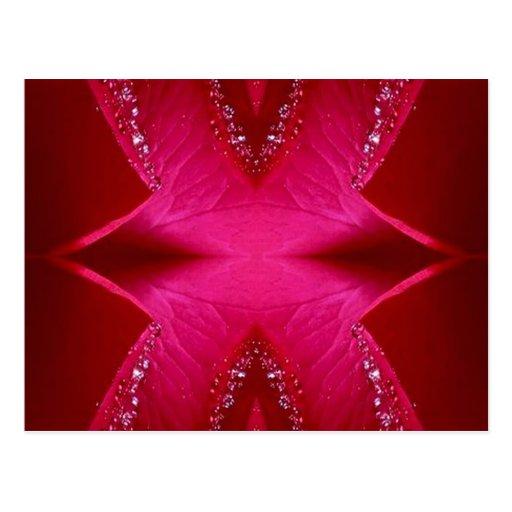 Arte puro del pétalo color de rosa - n roja sangre tarjetas postales