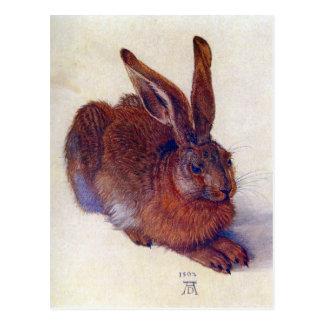 Arte renacentista, liebre joven de Albrecht Durer Postales