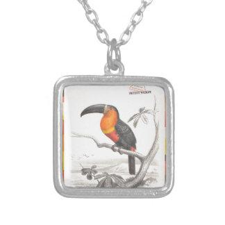 Arte responsable del viaje del pájaro de Toucan Collar Plateado