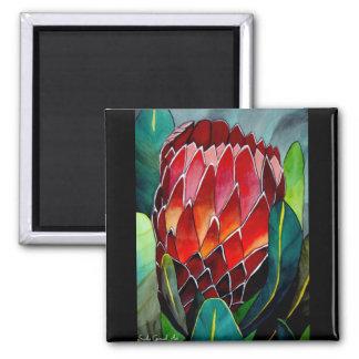 Arte rojo de la original de la flor del watercolou imán cuadrado