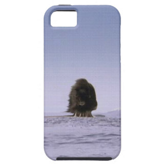 Arte sagrado ártico de la fauna de los bóvidos de funda para iPhone SE/5/5s