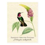 Arte Throated Amethyst del colibrí Tarjeta Postal