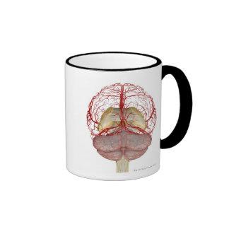 Arterias del cerebro 2 taza de dos colores