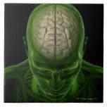 Arterias del cerebro azulejo cuadrado grande