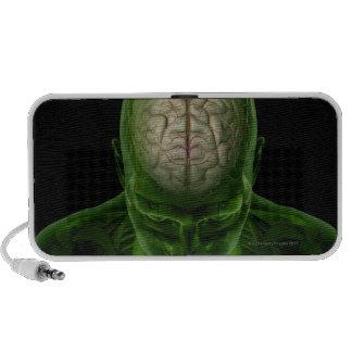Arterias del cerebro iPhone altavoz