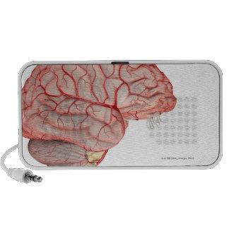 Arterias del cerebro mini altavoces