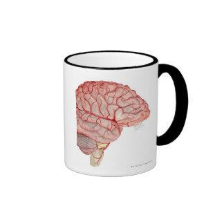 Arterias del cerebro taza de dos colores