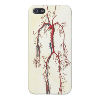Arteries Anatomical Art Cover For iPhone 5/5S