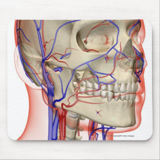 Arteries and veins in the head and neck mouse pad